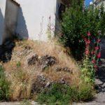Giardino_roccioso